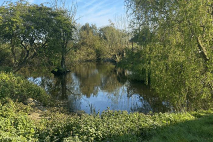 alex-oxley-garden