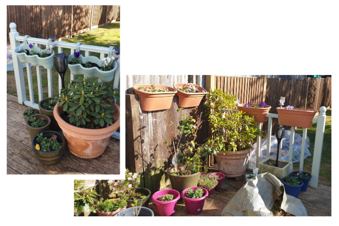 matt-mein-garden