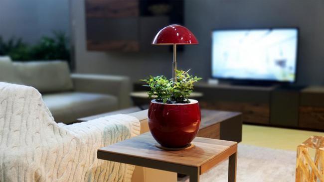 Glee- NEC Birmingham – JardiNice - Red Automatic Planter