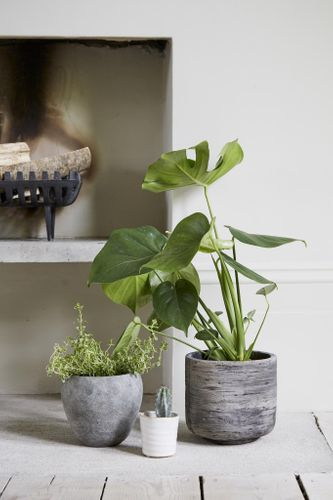 Woodlodge responds to soaring interest in houseplants by unveiling Root – its fresh range of stylish indoor pots