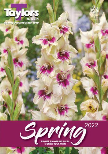 Spring 2022