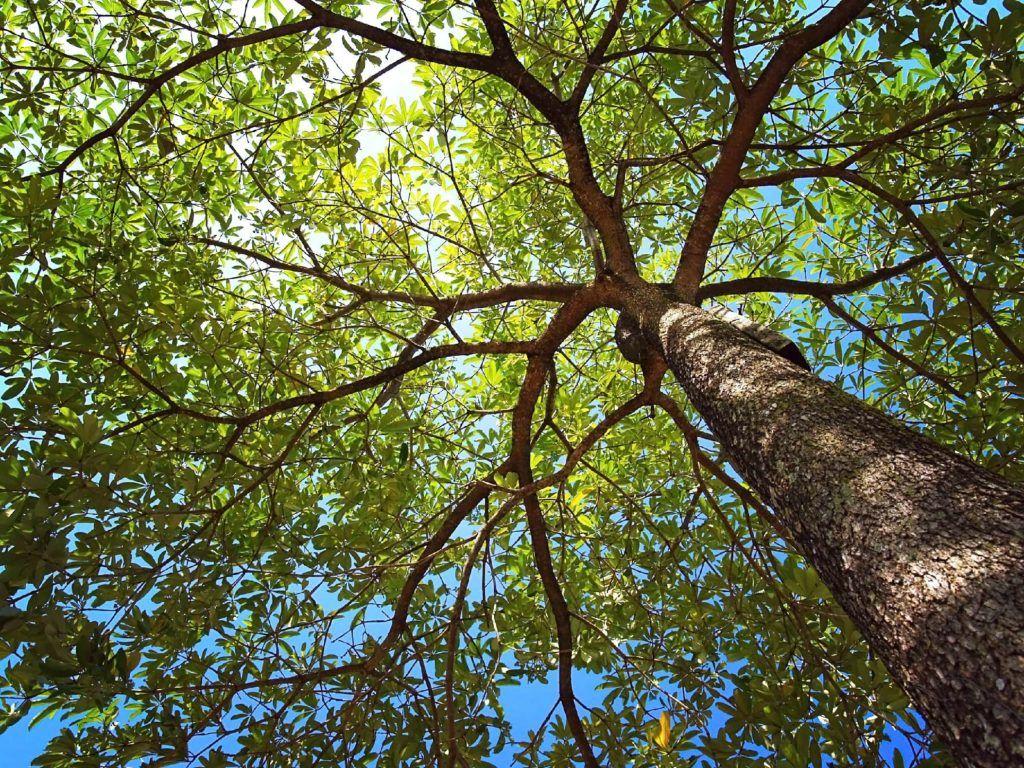 How biochar can help promote healthy tree growth