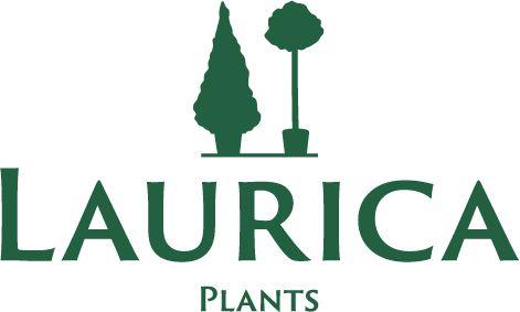 Laurica Plants