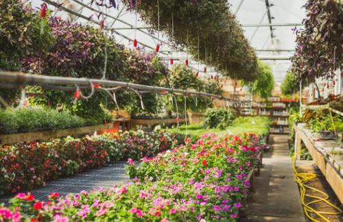 Transforming the garden centre retail space