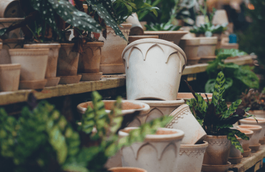 Gardening 101 with Grow Your Own