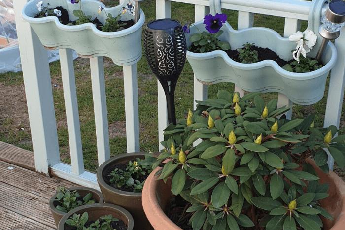 Celebrating National Gardening Week