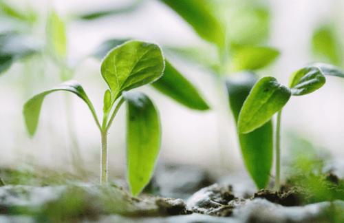 Meet the sustainable gardeners