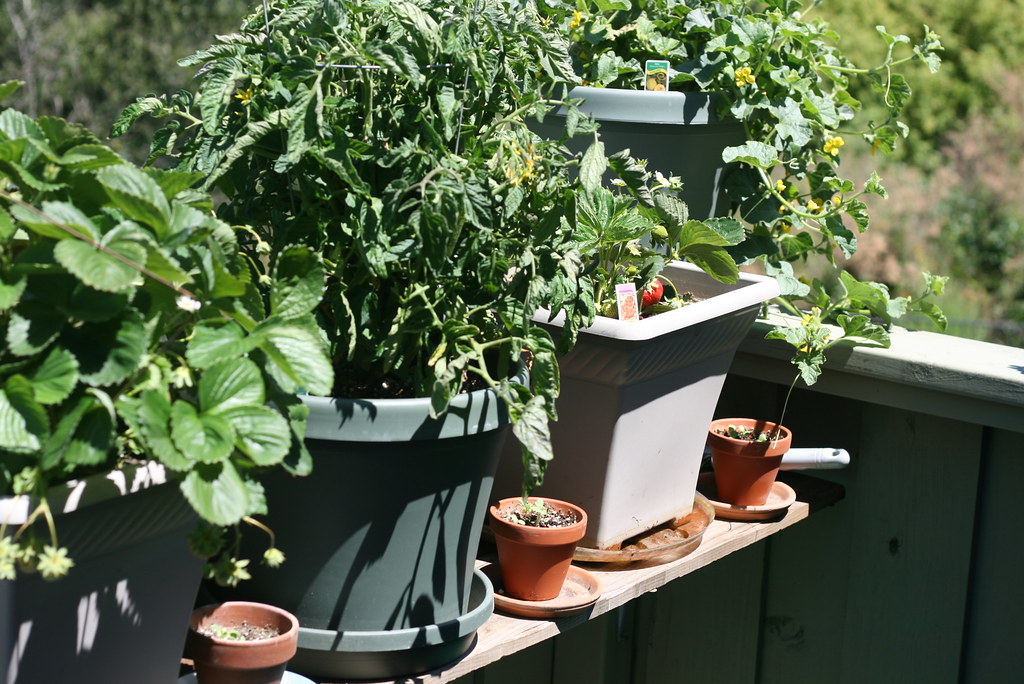 The Essentials for Setting Up an Edible Garden