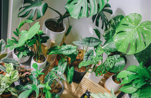 Which plants are the most Instagrammable?
