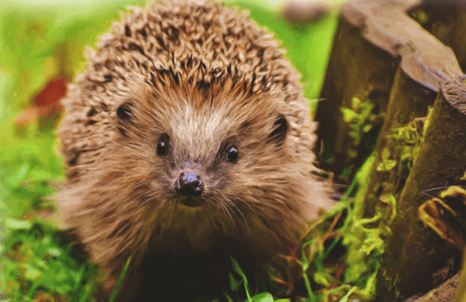 A guide to wildlife gardening