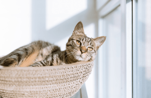 Pet industry trends for 2020 and beyond