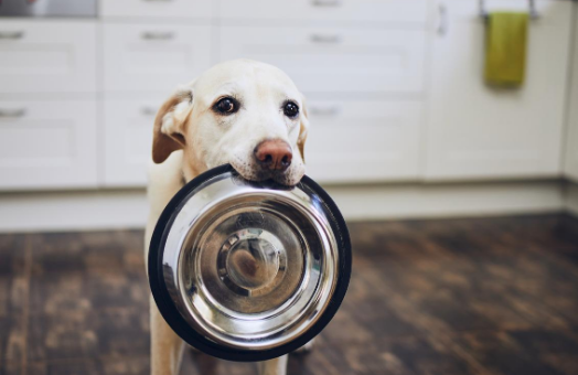 What's the deal with vegan pet food?