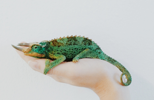 Catering for exotic pets in your product mix: reptiles