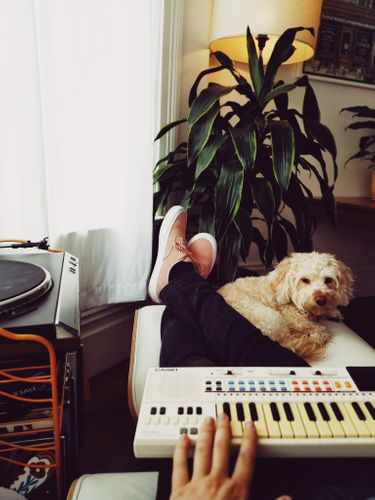 Does your pet have a favourite playlist?