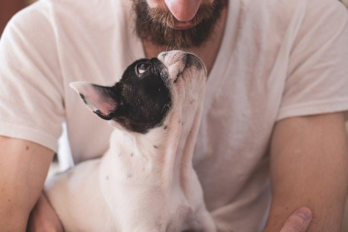 Pet humanisation and gifting continues to boost retail spending