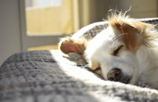 What heading back to work means for our pets