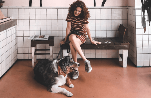 Top 5 features to include in your pet shop