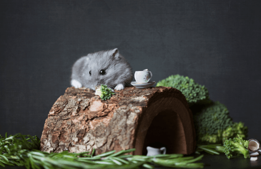 Sustainability and the pet market