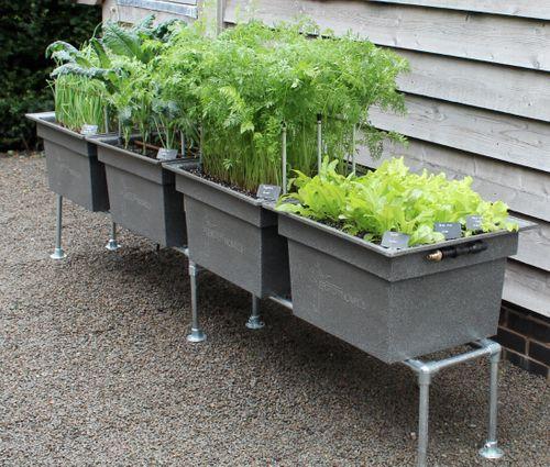 Four Planter