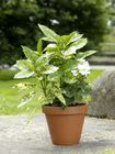 Naylor Patio Pots - Plain Pots