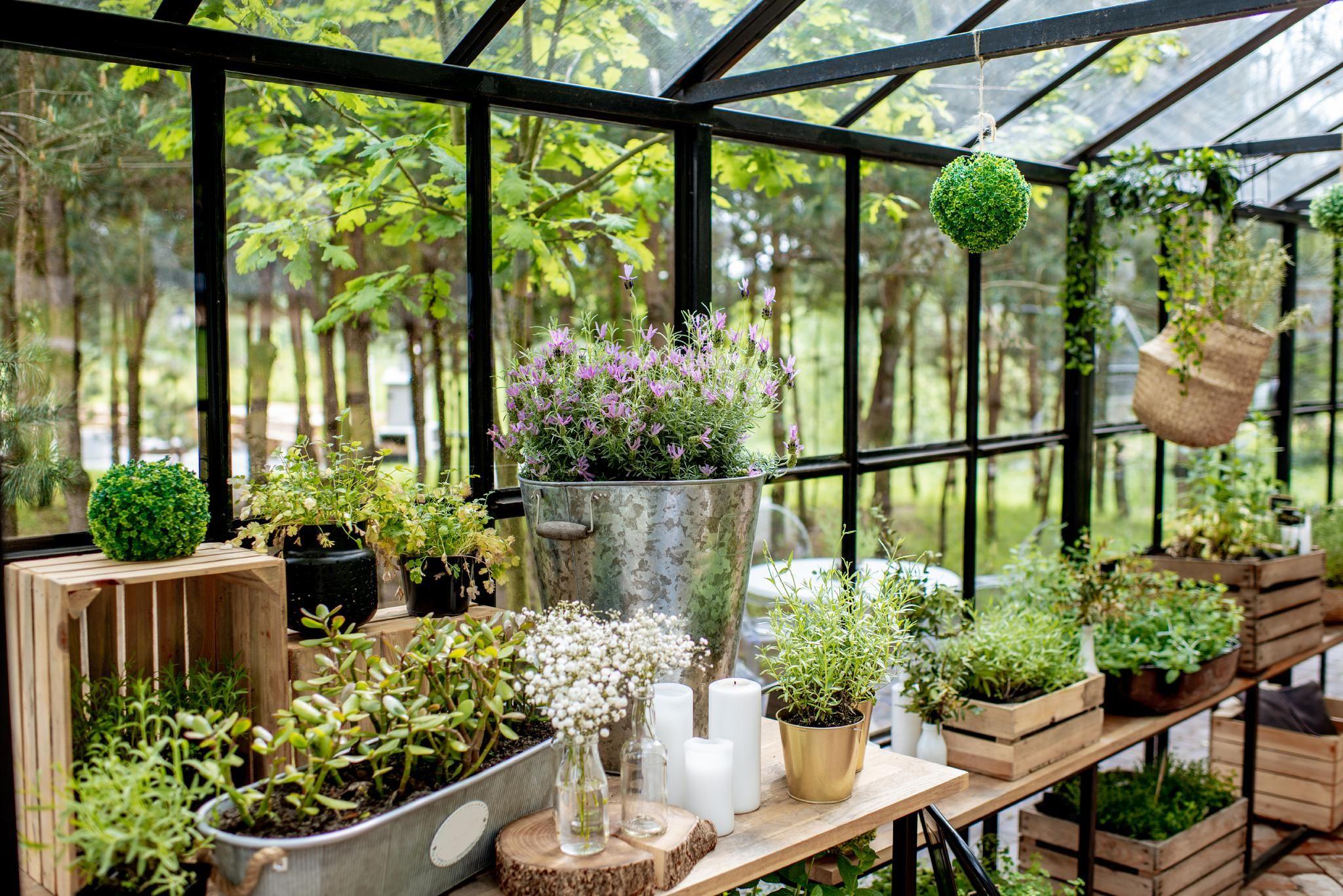 Plant Gift Shop