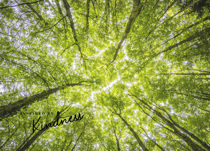 What role does carbon offsetting have in the fashion industry?