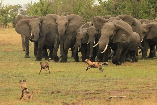 Will the African utility of the future be a lion, hyena, a white elephant or a herd of elephants? – GIBS study