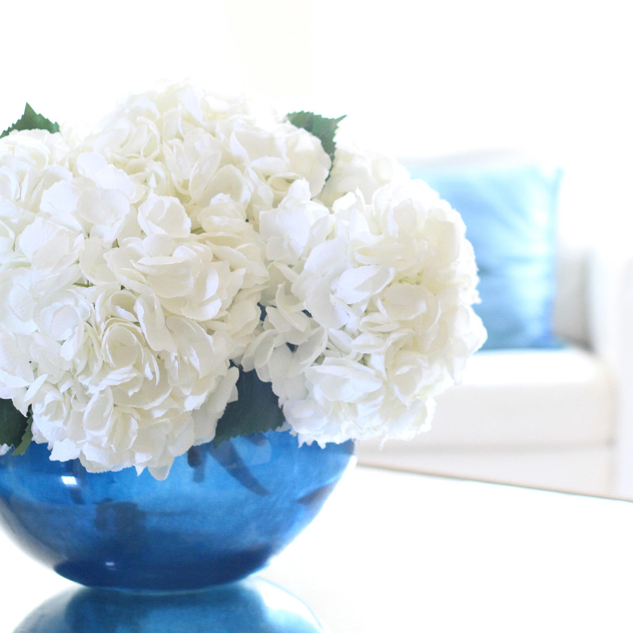 White Mophead Hydrangea