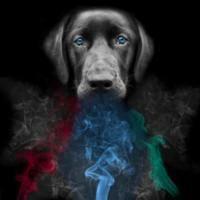 Vapor Wake® Explosive Detection Canines Evolved
