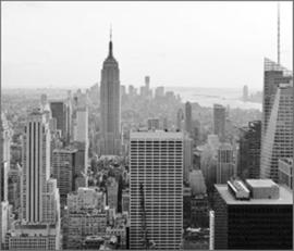 New York Vet