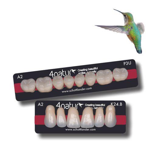 4natur denture teeth