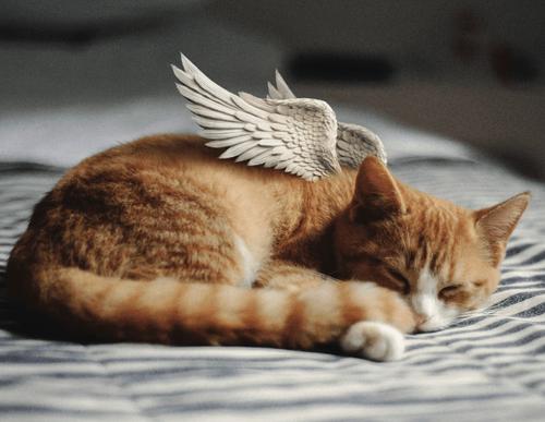 Enrichissez la prise en charge de la fin de vie des animaux de compagnie