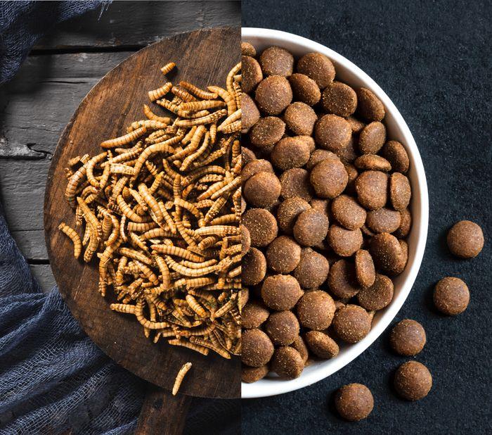 Des insectes dans la gamelle ? Une solution évidente aux intolérances et allergies alimentaires !