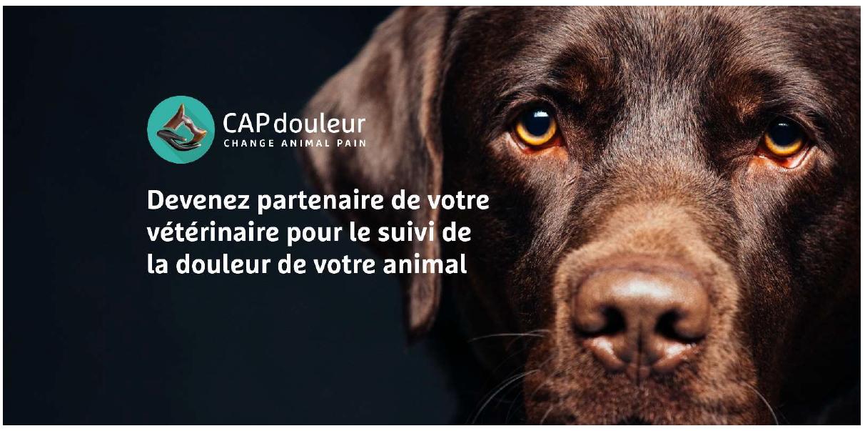 CAPdouleur Révolutionne le Suivi de l'Animal Douloureux par son Application Connectée