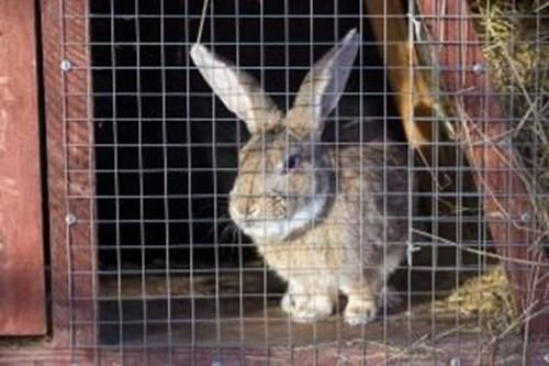 A reminder from Blake Vets on Fly Strike Alert Rabbits