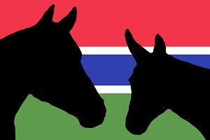 The Gambia Horse and Donkey Trust