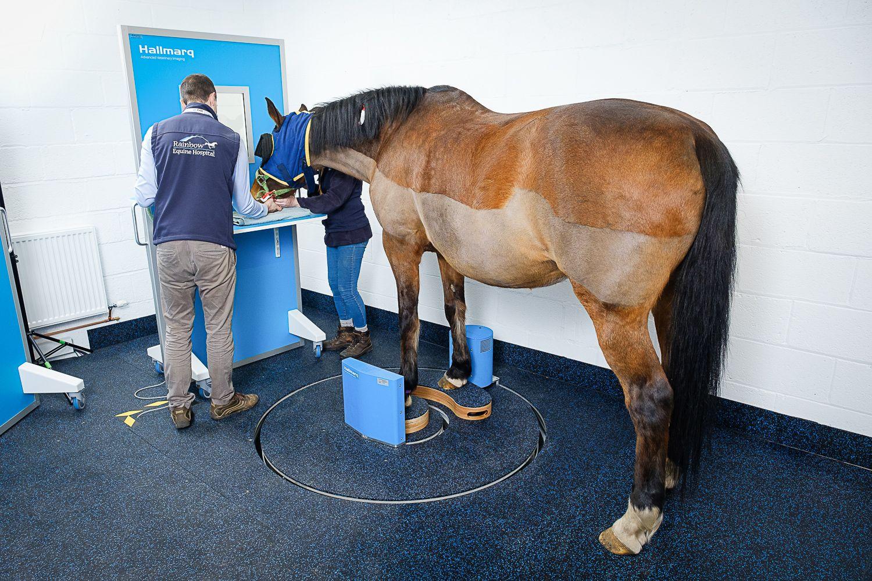 Hallmarq Veterinary Imaging adds Standing Equine Leg CT (slCT) to Help Improve Lameness Diagnosis
