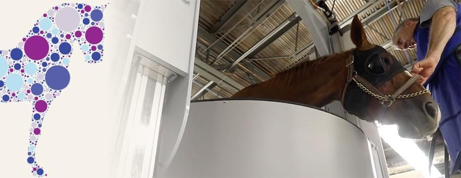 State-of-the-art equine standing CT now available in the UK, Ireland and parts of Europe