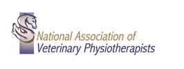 NAVP launches a Student Member Category