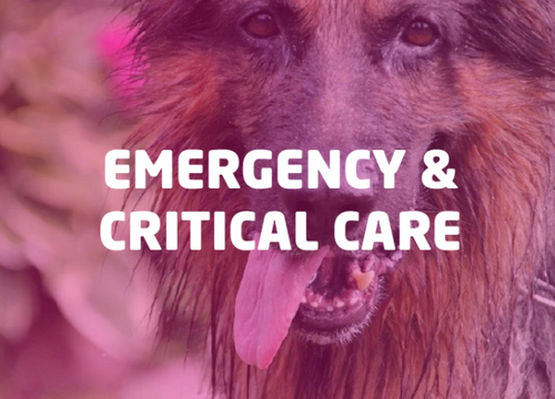 Emergency & Critical Care Sale