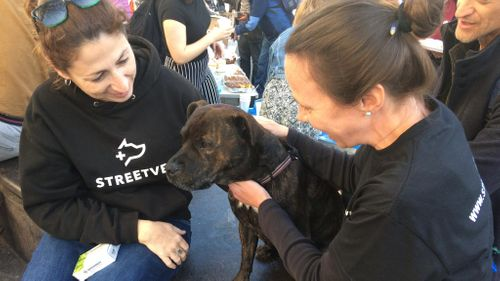 StreetVet During COVID-19 - Adapting to Lockdown
