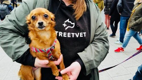 StreetVet: The Crisis and The Cure