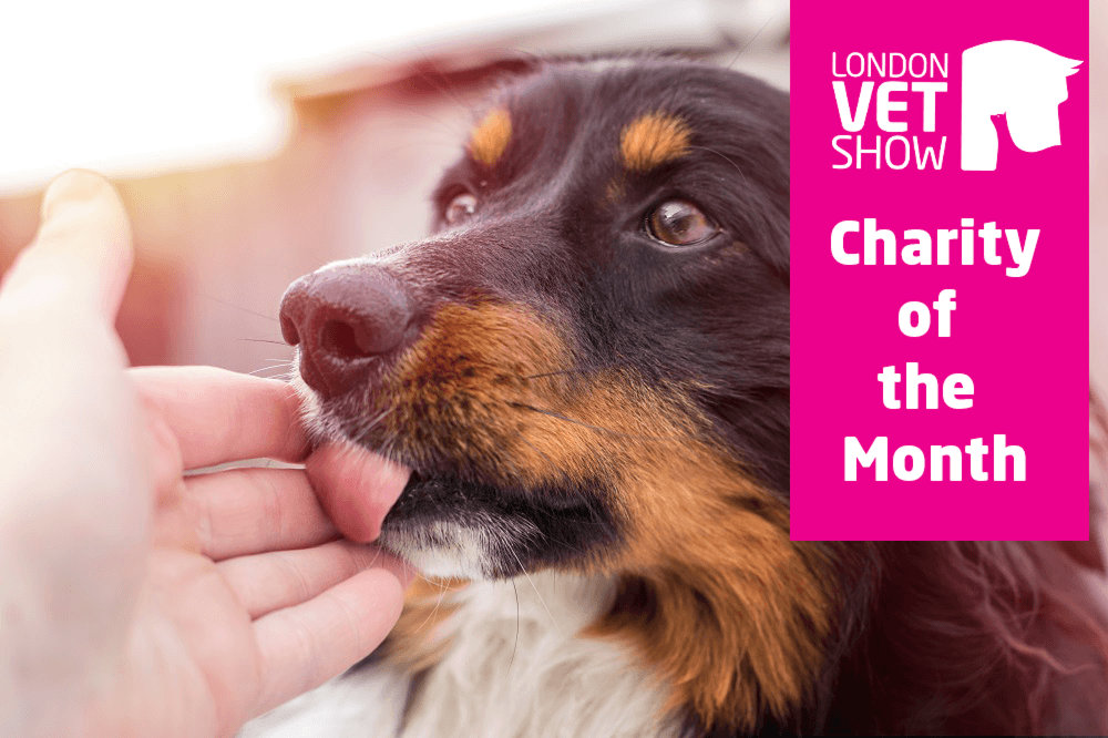 London Vet Show's Charity of the Month