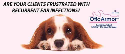 Recurrent Otitis Externa: Which approach do you take?