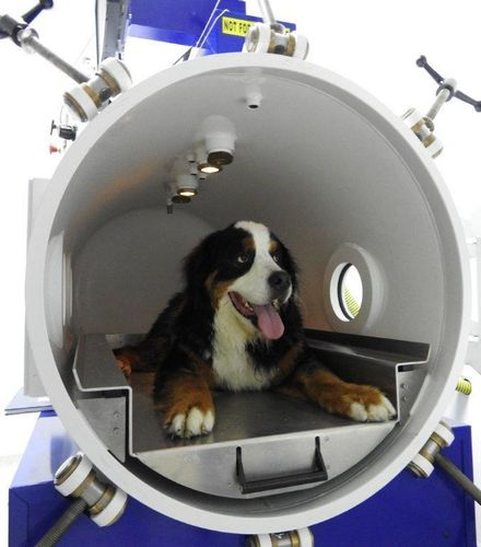 HVM Veterinary Hyperbaric Chambers Now in Practices Around the World