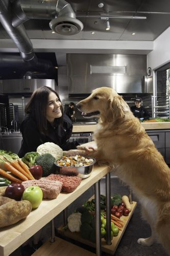 JustFoodForDogs Named #1 Recommended Fresh Pet Food by Veterinarians