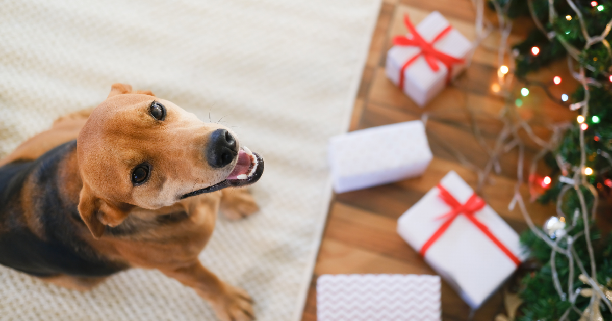 The Veterinary Industry Giving Tree: Reactions & Growth
