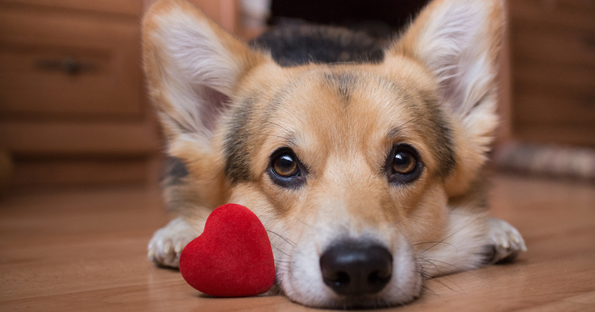 Valentine's Day in the Veterinary Clinic [6 Ways to Show Some Love]