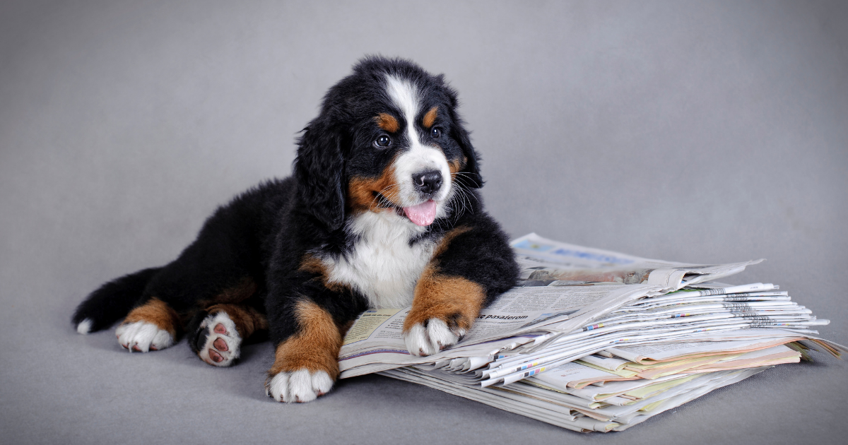 Veterinary Industry News: January/February Roundup