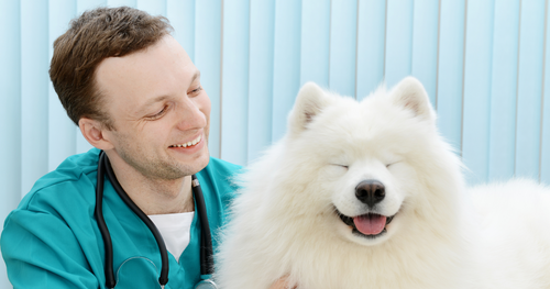Celebrating World Veterinary Day: A Love Letter to the Profession